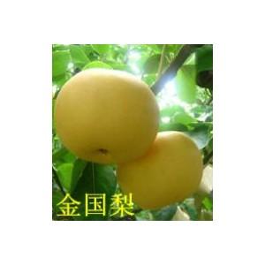 高纯度梨苗苗优选鑫瑞果蔬公司——梨树苗供应商