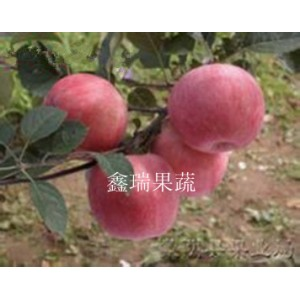 新疆苹果苗——供应山东新型苹果苗