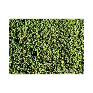 莱芜*青皮花椒粒供应  ——花椒粒用途